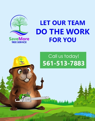 SaveMore Tree Service Contact Us Beaver