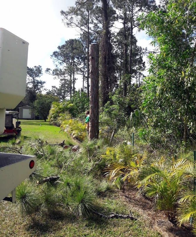 Savemore tree service land clearing palm beach county