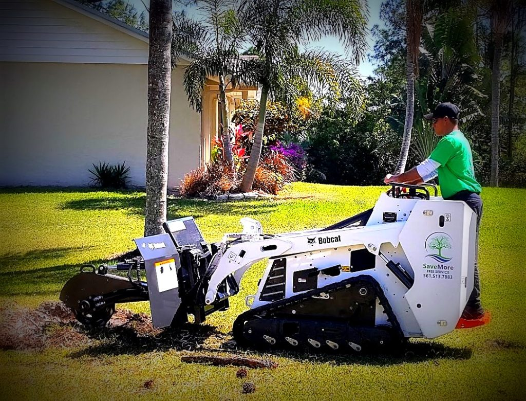 Stump Grinding and Removal in Loxahatchee and all of Palm Beach