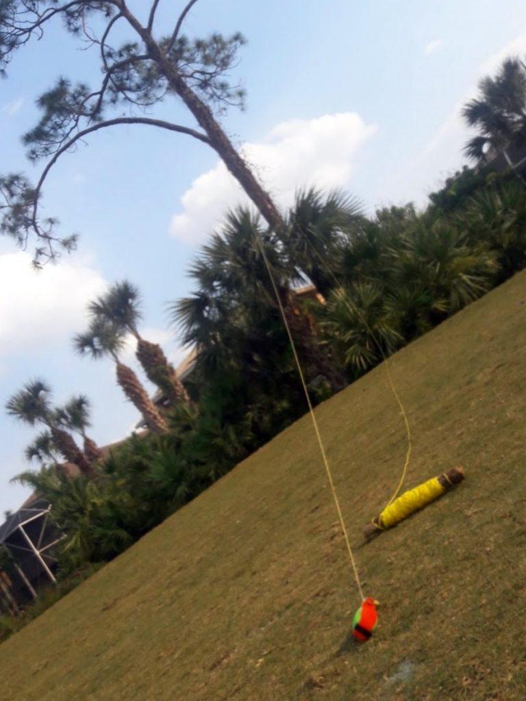 SaveMore Tree Service Pine Tree Removal Jupiter 2