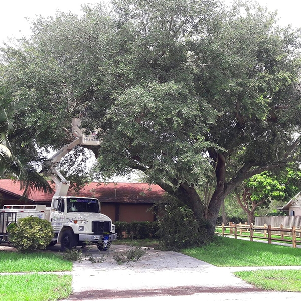 Tree Trimming West Palm Beach - SaveMore Tree Service