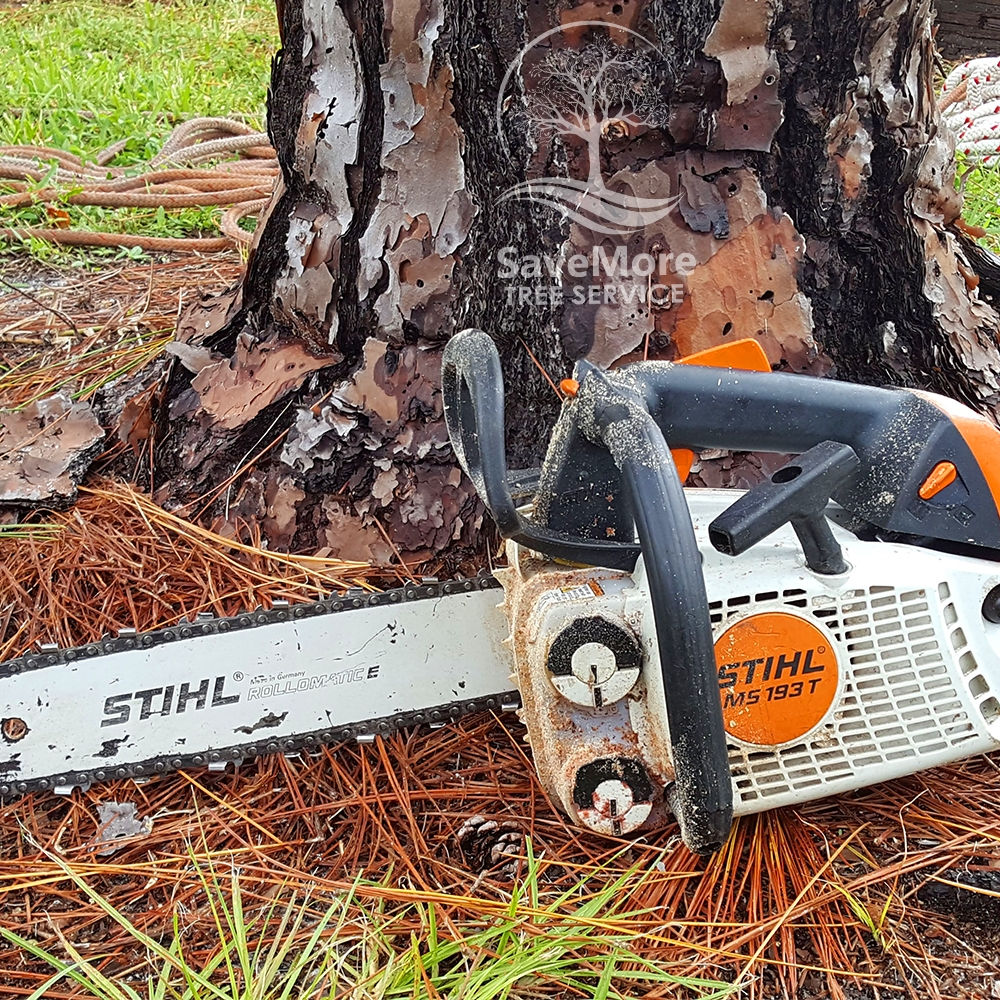 Tree Removal Loxahatchee, Wellington, Royal Palm Beach and Palm Beach County