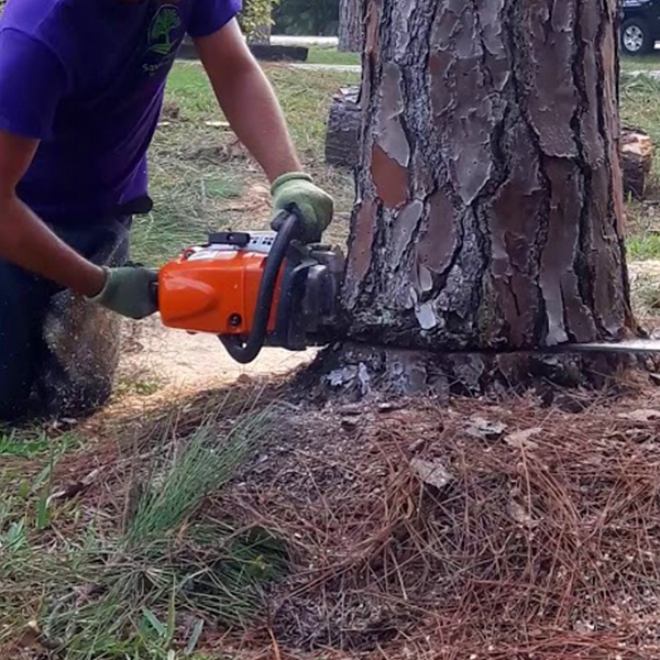 Tree Removal Loxahatchee, Tree Removal Royal Palm Beach, Tree Removal Wellington, Tree Removal West Palm Beach, Tree Removal Jupiter - SaveMore Tree Service