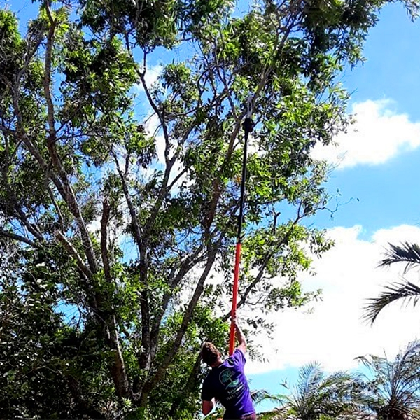 Tree Trimming and Tree Pruning in Loxahatchee, Royal Palm, West Palm, Acreage, Wellington, Palm Beach Gardens, Jupiter - SaveMore Tree Service