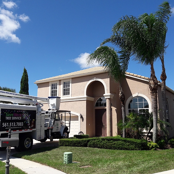 Tree Trimming in Royal Palm Beach, FL - SaveMore Tree Service