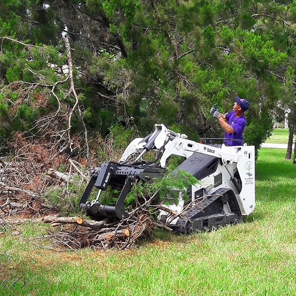 Tree-Trimming-Tree-Removal-Cleanup-Pruning-Wellington-Savemore-Tree-Service-Bobcat