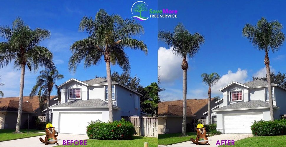 Tree Trimming in Wellington, FL - SaveMore Tree Service