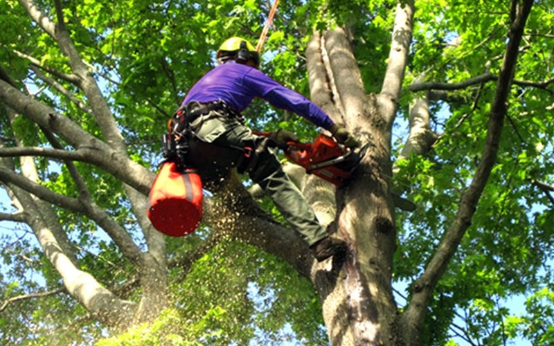 Tree Removal - Why you Should Hire a Professional