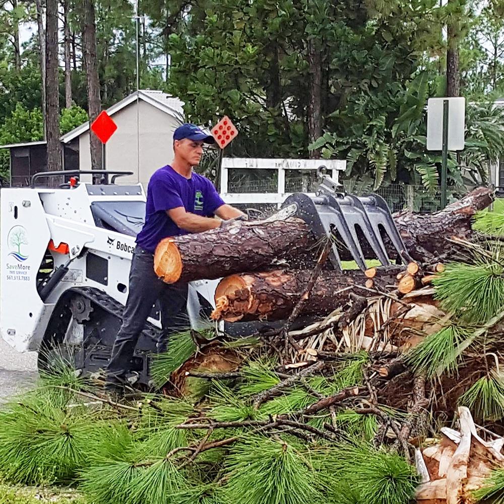 Contact us - SaveMore Tree Service