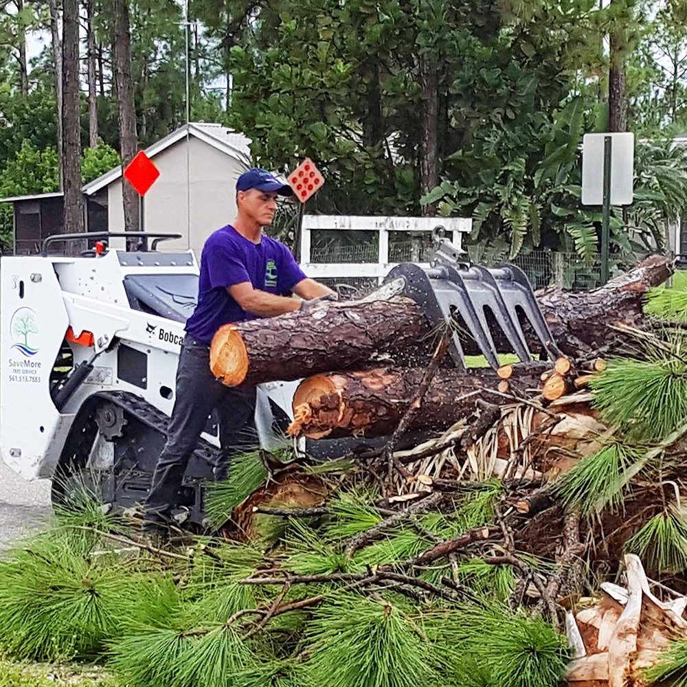 Storm Preparation and Cleanup Loxahatchee, West Palm Beach Palm Beach Gardens, Jupiter, Palm Beach County SaveMore Tree Service