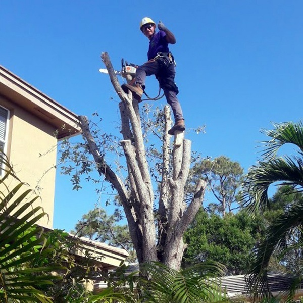 Tree Removal Loxahatchee, FL