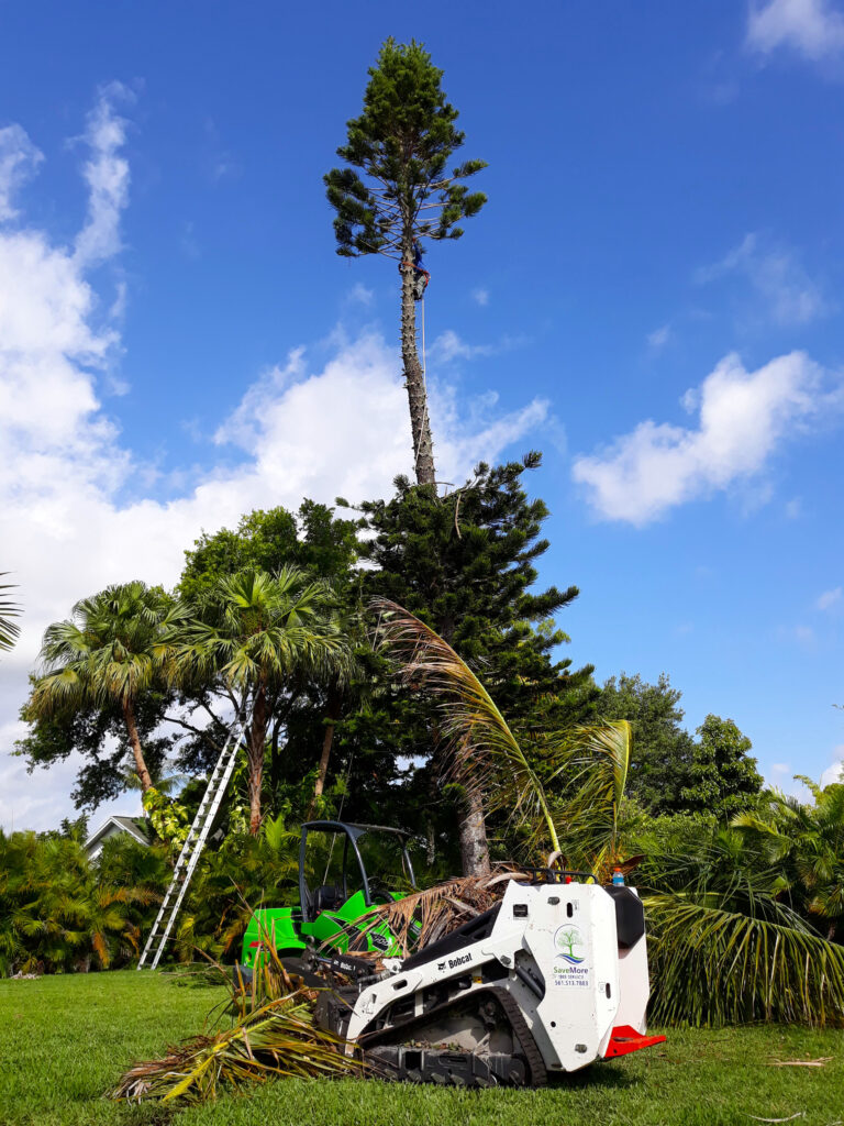 SaveMore Tree Service - Pine Tree Trimming and Removal - Loxahatchee