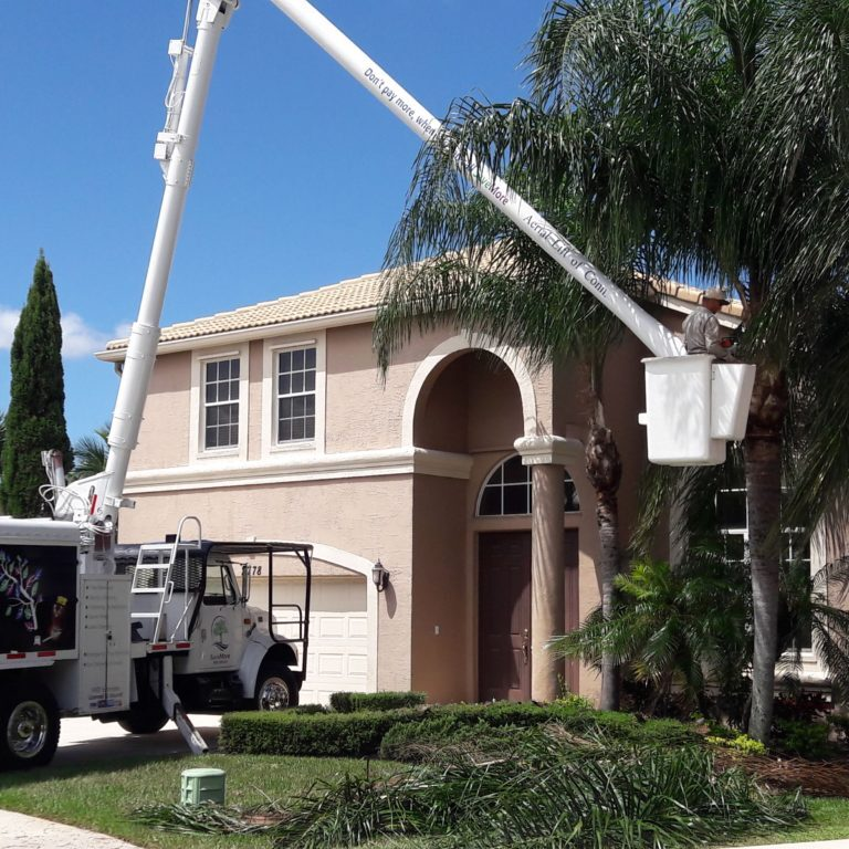 Tree Trimming and Tree Pruning Wellington SaveMore Tree service