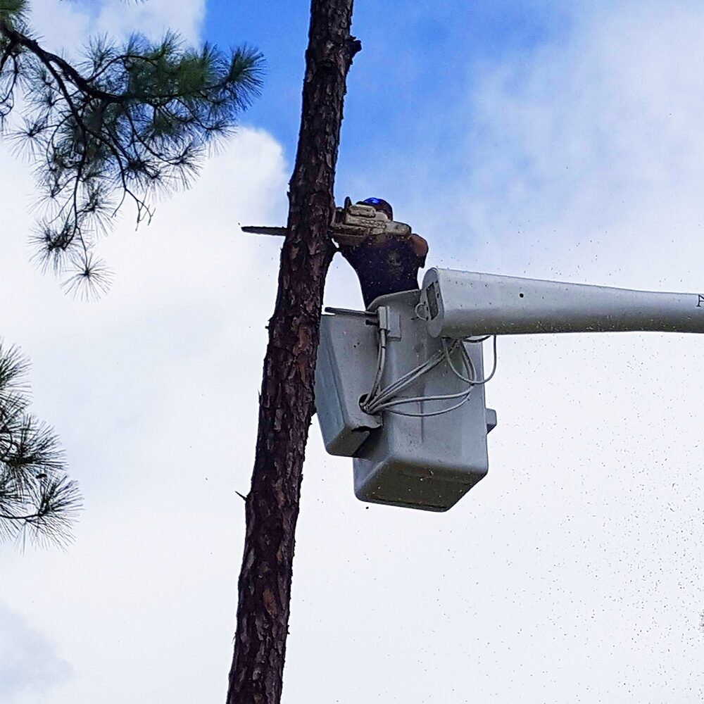 Tree Removal Loxahatchee, Royal Palm Beach, Wellington, FL